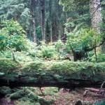 Forrester_Island_Wilderness